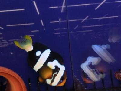 海水魚 725