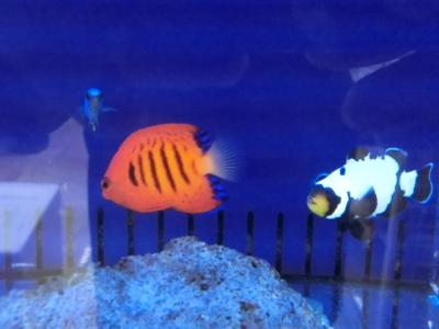 海水魚 728