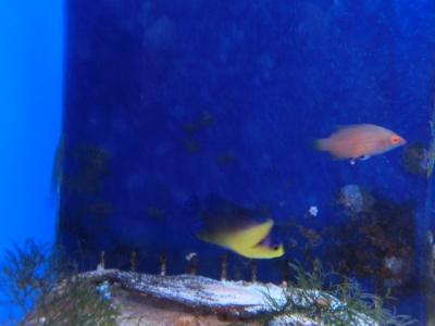 海水魚 732