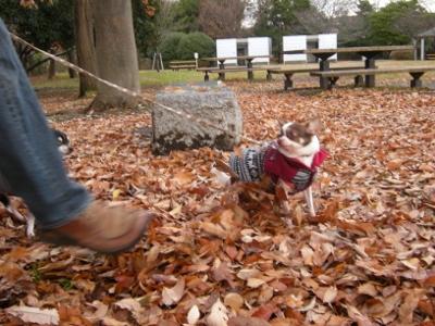 落ち葉の公園1-2