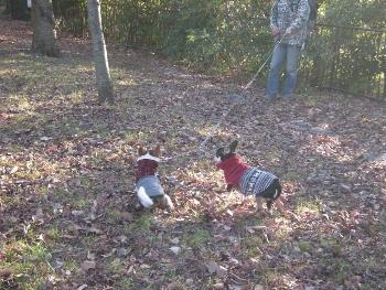落ち葉の公園2回目2
