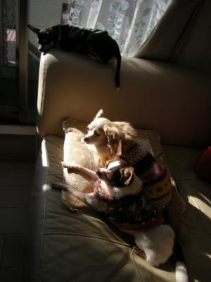 ソファで日向ぼっこさ1