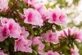 花」ピンク