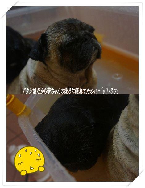 catsお風呂