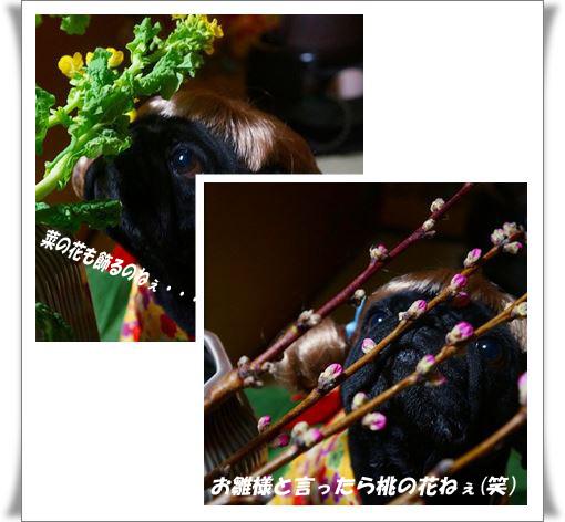 catsmoモモの花