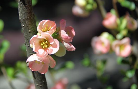 17_ピンクのかわいいお花