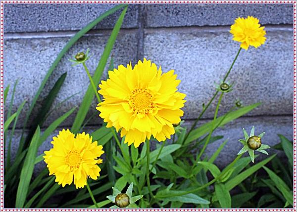 IMG_7175_201506301217247f4.jpg