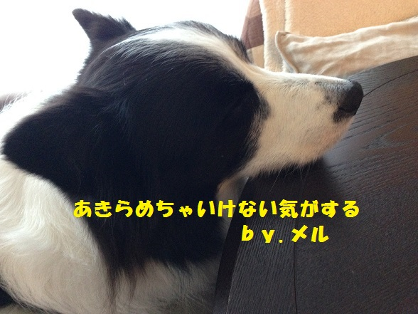IMG_7965.jpg