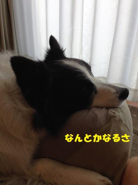 IMG_8915.jpg