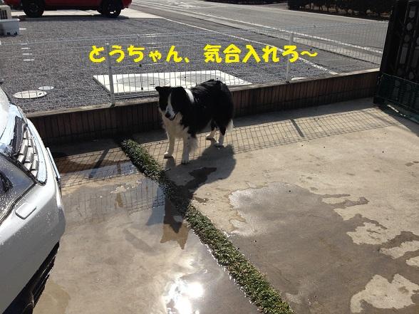 IMG_8971.jpg
