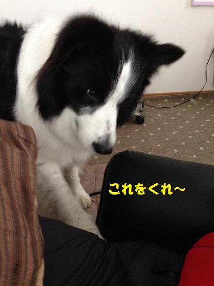 IMG_9078.jpg