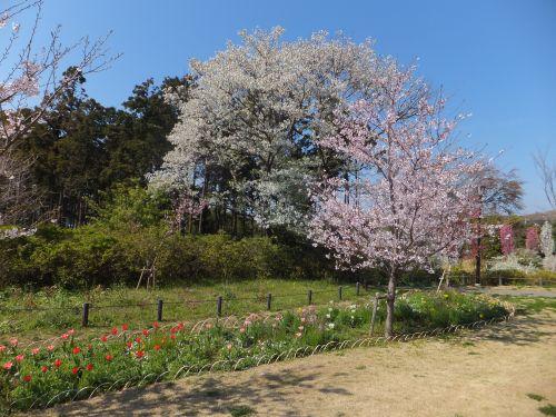 住友俣野別邸庭園3