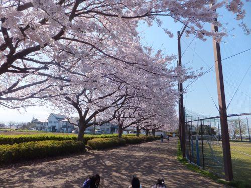東俣野中央公園1