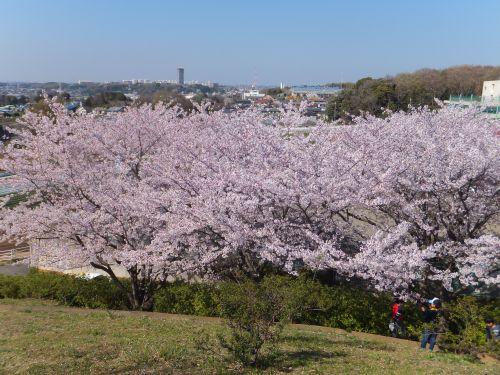 東俣野中央公園2