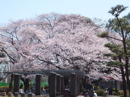 湘南台公園1