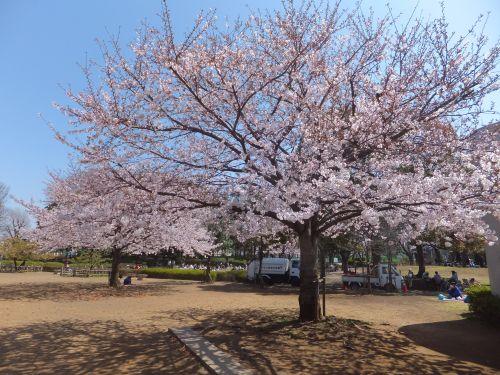 湘南台公園2