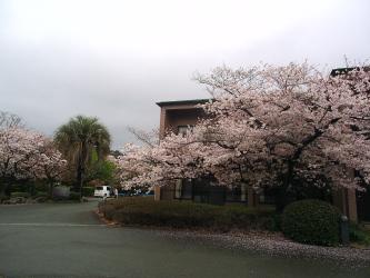 H270330桜