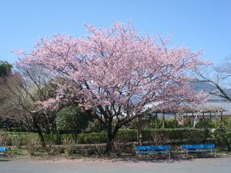 H270317桜
