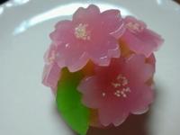 2015 桜の生菓子