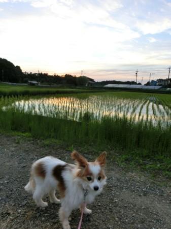 20150524sanpo_kumo.jpg