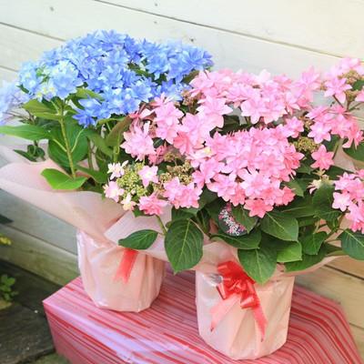 y-bonsai_f1500.jpg