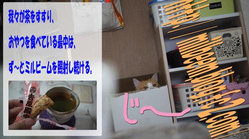 DSC03617_2.jpg