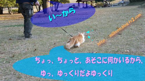 DSC05847_2.jpg