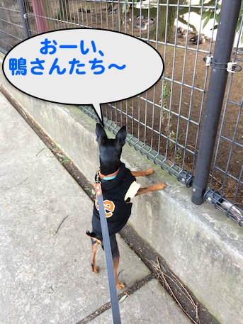 20150221-3.png