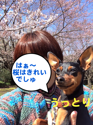 20150330-5.png