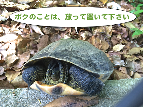 20150501-1.png