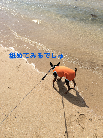 20150630-6.png
