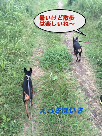 20150723-4.png