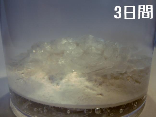 009 マジッククリスタル 観察