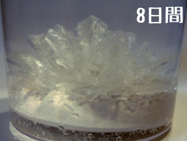 014 マジッククリスタル 観察