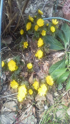 みらい住建 リフォーム またまた春の香り6号②縮小