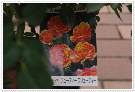 IMGP3341.jpg