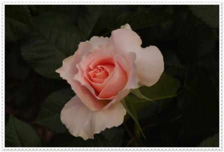 IMGP3359.jpg