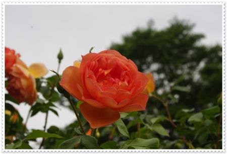 IMGP3363.jpg