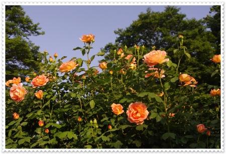 IMGP3900.jpg