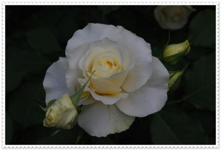 IMGP4535.jpg