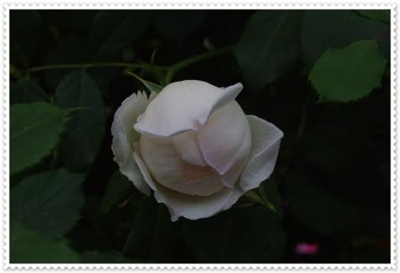 IMGP4542.jpg