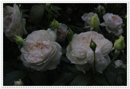 IMGP4598.jpg