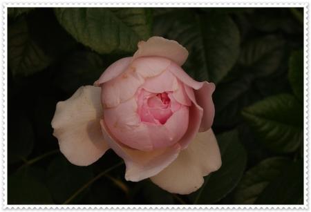 IMGP4660.jpg