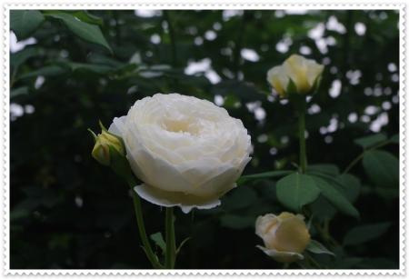 IMGP5970.jpg