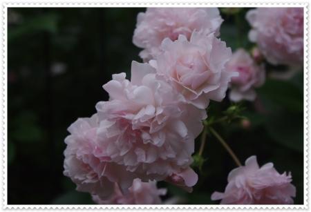 IMGP5988.jpg