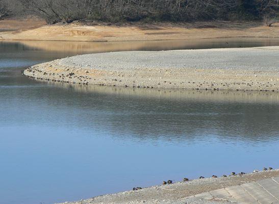 2701狭山湖2