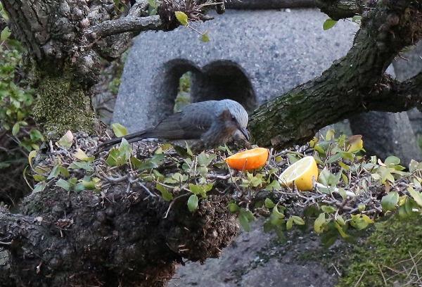 中鳥 ④ 27.2.9