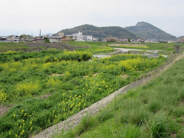 高瀬川辛子菜 南方面 27.4.21