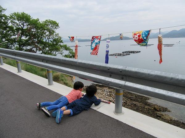 鯉のぼり大漁旗を見る孫 27.4.29