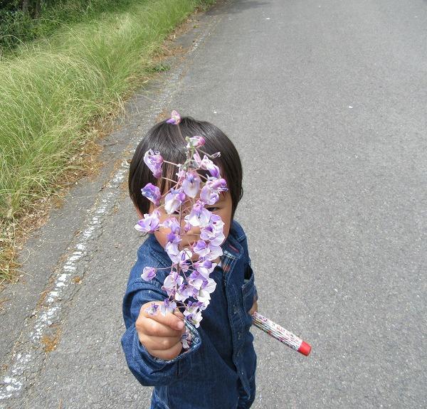 藤の花房を持つ孫 27.4.29